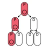Asymmetric plasmid partitioning (APP)