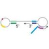 Reverse Transcription Loop-mediated Isothermal Amplification (RT-LAMP)