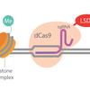 Epigenetic CRISPR/Cas9
