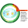Mitotic Cell Atlas